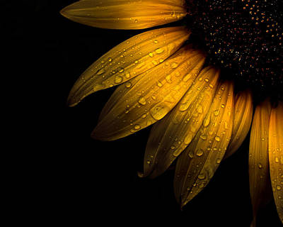 Backyard Flowers 28 Sunflower Art Print by Brian Carson