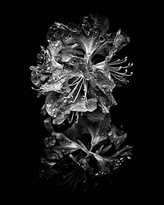 Photograph - Backyard Flowers In Black And White 1 After The Storm by Brian Carson