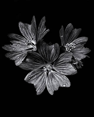 Photograph - Backyard Flowers In Black And White 11 After The Storm by Brian Carson