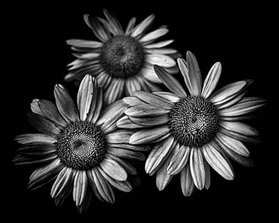 Photograph - Backyard Flowers In Black And White 12 by Brian Carson