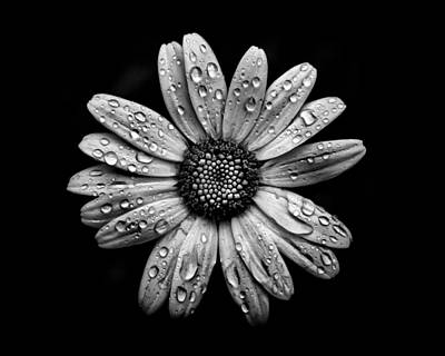 Backyard Flowers In Black And White 16 After The Storm Art Print by Brian Carson