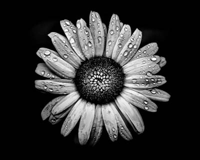 Photograph - Backyard Flowers In Black And White 17 After The Storm by Brian Carson