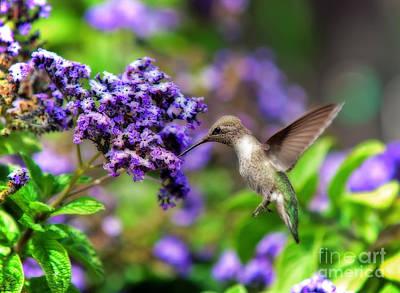 Photograph - Backyard Hummingbird by Eddie Yerkish