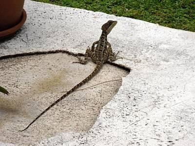 Photograph - Backyard Lizard by Ron Davidson