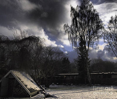 Photograph - Backyard by Michael Canning