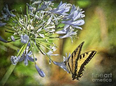 Photograph - Backyard Nature by Peggy Hughes