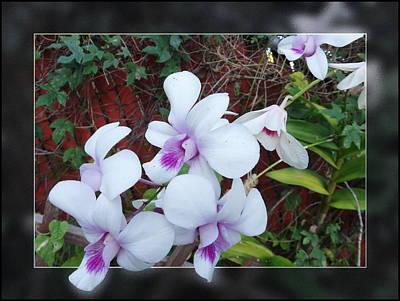 Art Print featuring the photograph Backyard Orchid Two by Ginny Schmidt