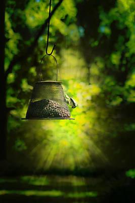 Photograph - Backyard Splendor by Kim Henderson