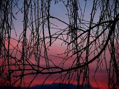 Backyard Sunset Art Print