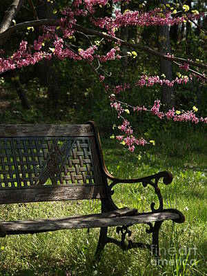 Photograph - Backyard Tranquility With Redbud by Anna Lisa Yoder