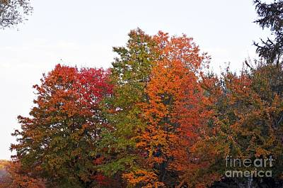 Art Print featuring the photograph Backyard Trees by Judy Wolinsky