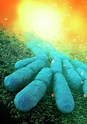 Organism Wall Art - Photograph - Bacteria by Animate4.com/science Photo Libary