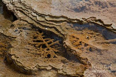 Bacterial Mat 8 Original