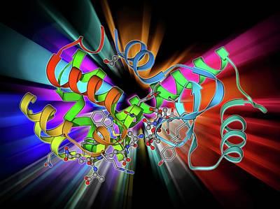 Bacteriophage Wall Art - Photograph - Bacteriophage T4 Lysozyme Molecule by Laguna Design
