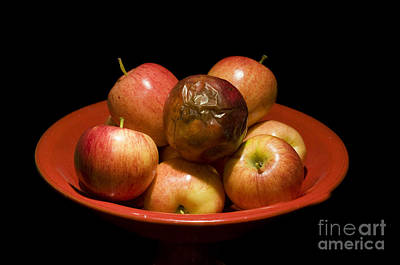 Discrimination Photograph - Bad Apple by William H. Mullins
