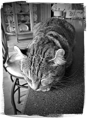 A Gray Tabby Highlander Lynx Cat Asleep On The Kitchen Counter Photograph - Bad Cat by Susan Leggett