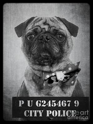 Bad Dog Print by Edward Fielding