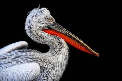 Bad Hair Photograph - Bad Feathers Day by Joachim G Pinkawa
