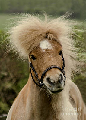 Bad Hair Day 2 Art Print by Linsey Williams
