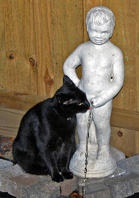 Boy Peeing Photograph - Bad Kitty by Boone Fowler