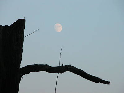 Photograph - Bad Moon Rising by Michael Gooch