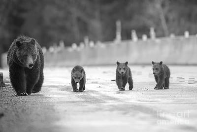Photograph - Bad News Bears by Deby Dixon