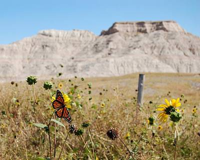 Photograph - Badlands Butterfly by Dakota Light Photography By Dakota