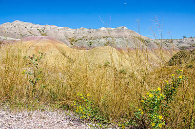 Photograph - Badlands Jungle On A Seabed by Debra Martz