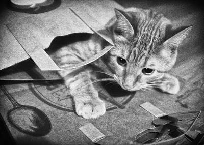 Photograph - Bag O Kitty by Patrick M Lynch