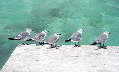 Photograph - Bahama Birds by Aimee L Maher Photography and Art Visit ALMGallerydotcom