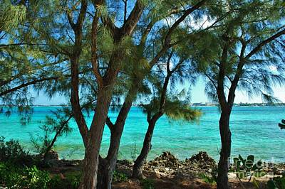 Photograph - Bahamas Cypress by Bob Sample