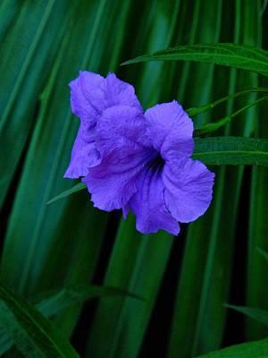 Photograph - Bahamas Flowers 001 by Lance Vaughn