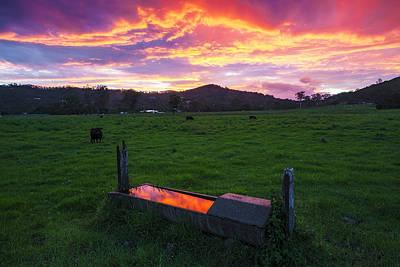 Bahrs Scrub Sunset Art Print by Gareth Mcguigan