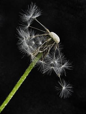 Sweet Dreams Photograph - Balanced  by Marianna Mills