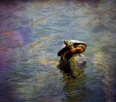Photograph - Balancing Act by Deena Stoddard
