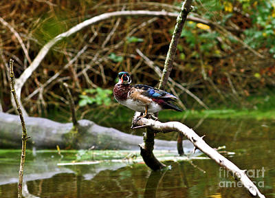 Photograph - Balancing Act by Terry Elniski