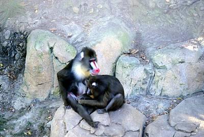 Photograph - Balboa Park II - San Diego Zoo by Harold E McCray