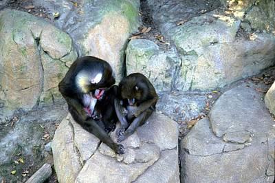 Photograph - Balboa Park - San Diego Zoo by Harold E McCray