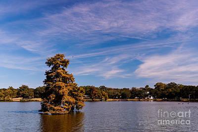 Bald Cypress And Wispy Clouds City Park By University Lake - Baton Rouge Louisiana Art Print by Silvio Ligutti