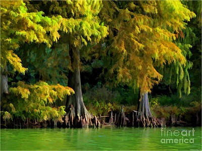 Photograph - Bald Cypress Trees 1 - Digital Effect by Debbie Portwood
