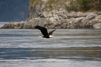 Photograph - Bald Eagle - 0294 by S and S Photo