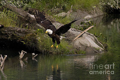 Anchor Down - Bald Eagle #1283 by J L Woody Wooden