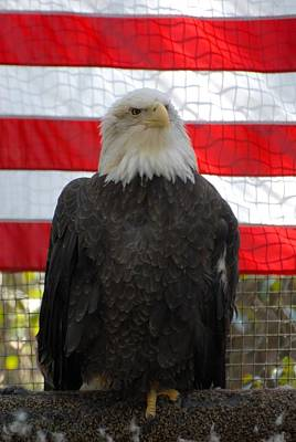 Bald Eagle 265 Art Print by Joyce StJames