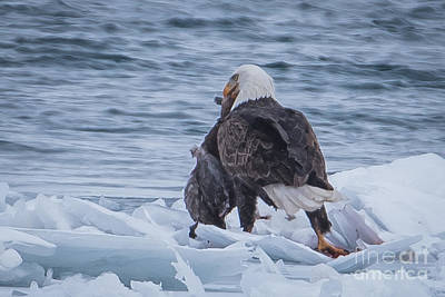 Photograph - Bald Eagle And Duck by Ronald Grogan