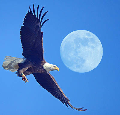Photograph - Bald Eagle And Full Moon by Raymond Salani III