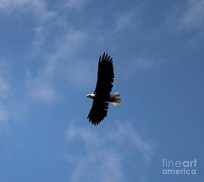 Photograph - Bald Eagle by Ann E Robson