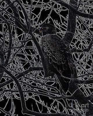 Photograph - Bald Eagle Art by Ronald Grogan