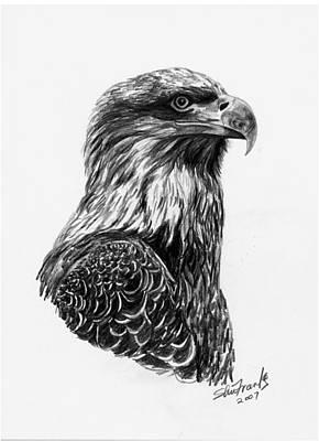 Bald Eagle Pencil Drawing Drawing - Bald Eagle  Bird Of Prey by Sheri Marean