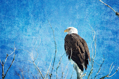 James Insogna Photograph - Bald Eagle Blues by James BO  Insogna