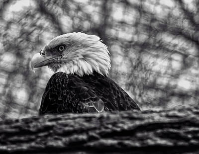 Digital Art - Bald Eagle by Chris Flees